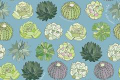 Succulent-garden-1