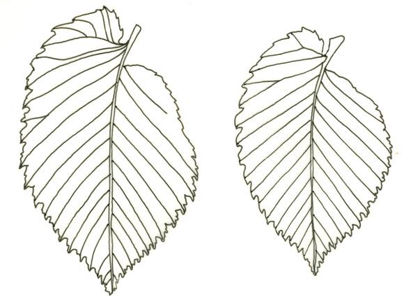 foglie0001