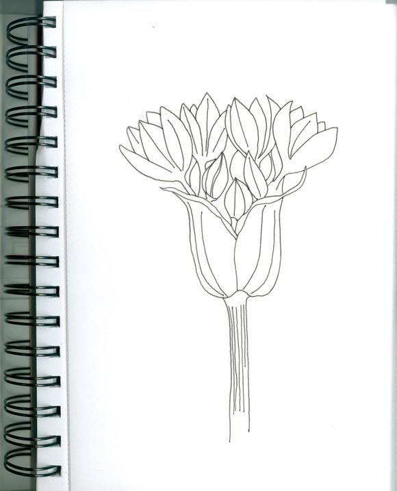 marta-flower