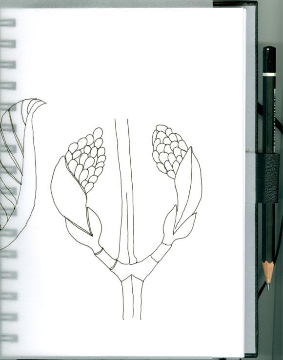 marta's-blossom